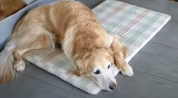orthopedic dog beds work
