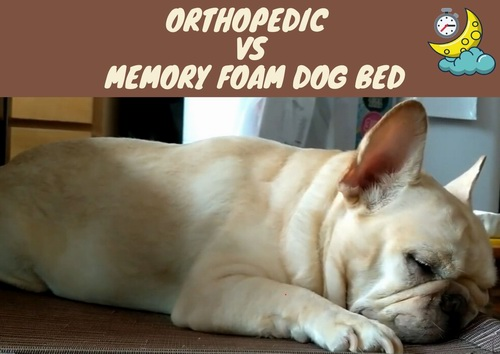 orthopedic vs memory foam dog bed